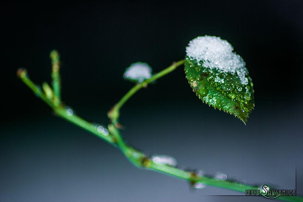 winter2015-01