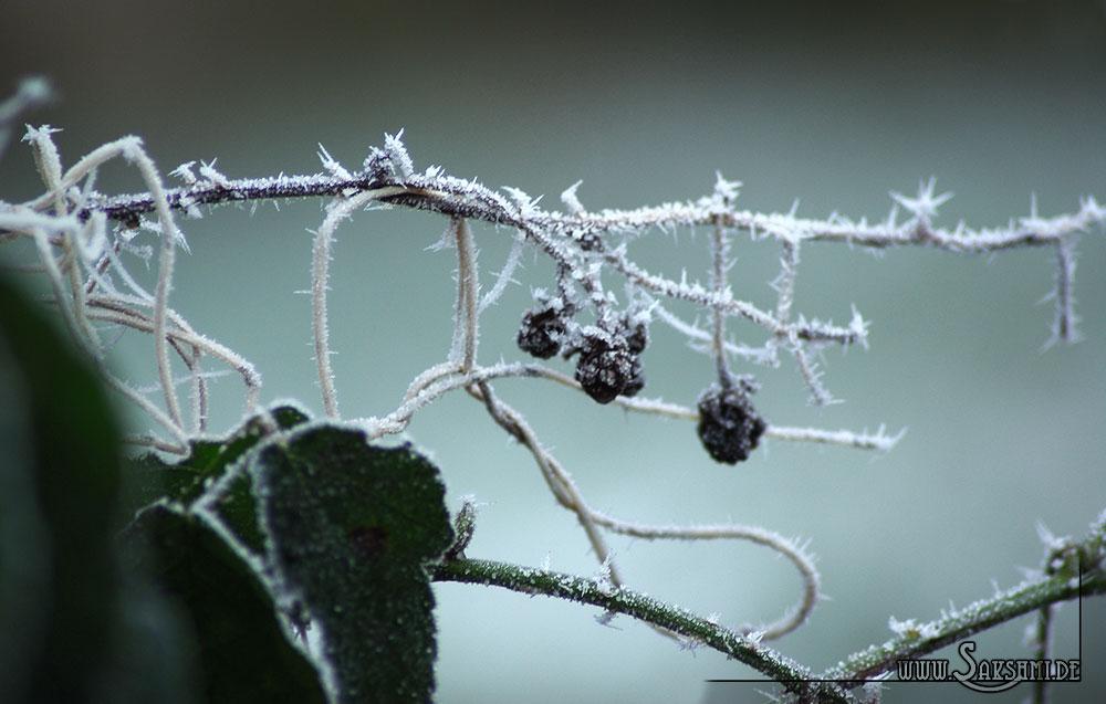 winter2015-02