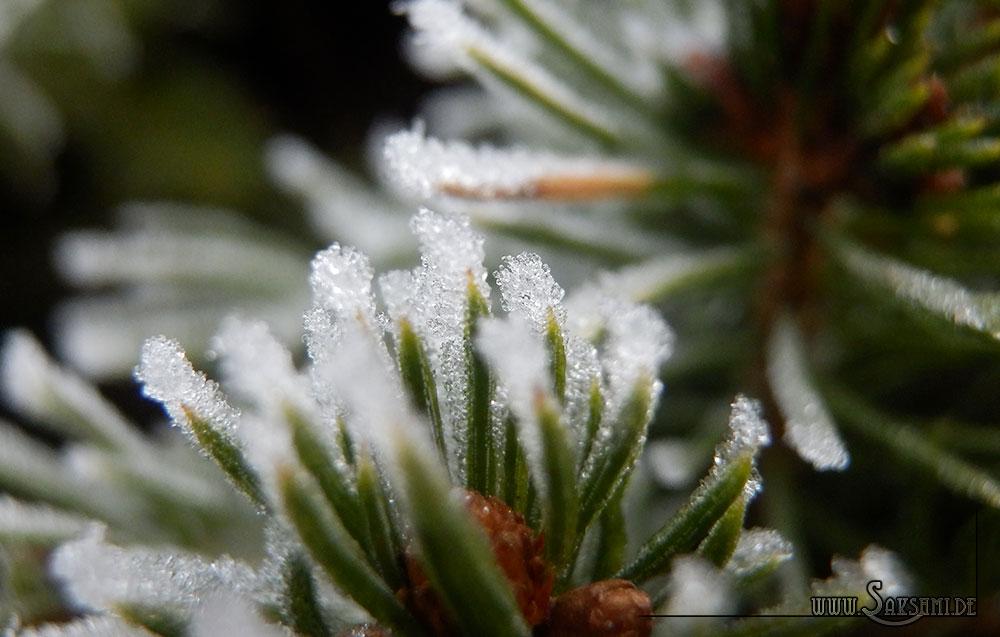 winter2015-03