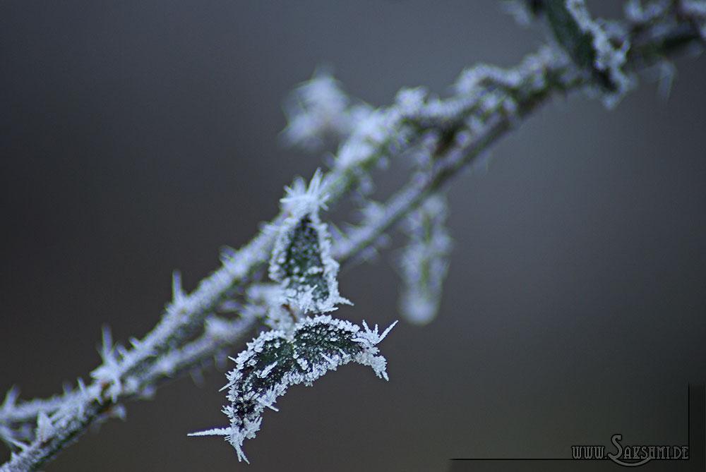 winter2015-04